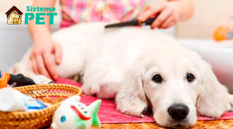 Pet Shop no Hotel&DayCare ou Banho&Tosa Vale a Pena?